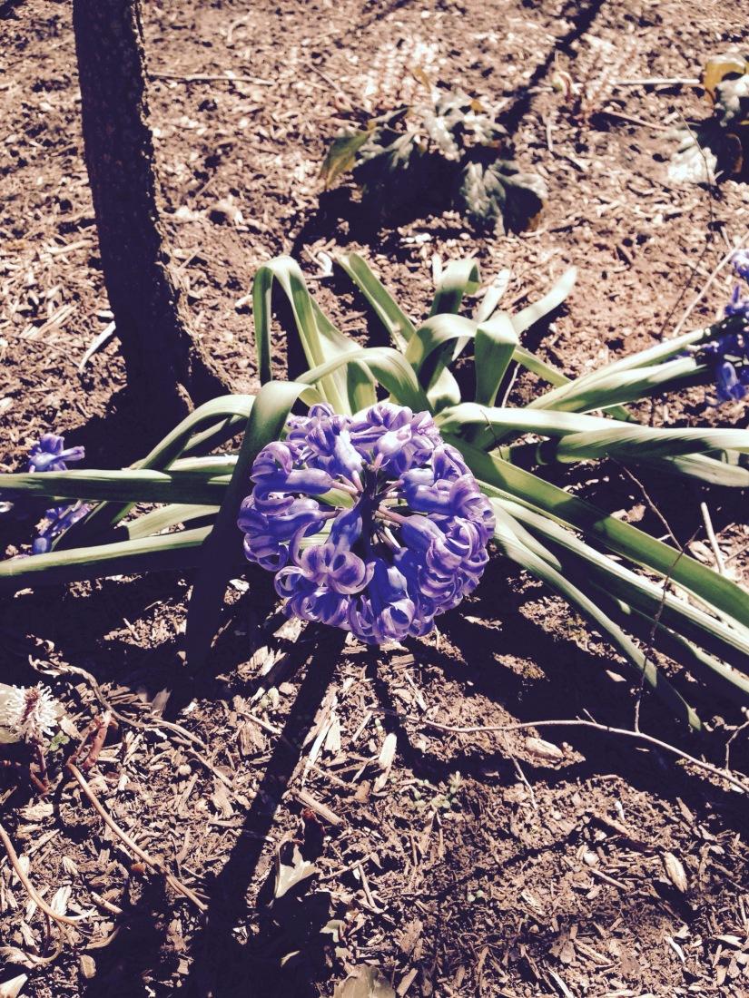 Nature in the Blue RidgeMountains